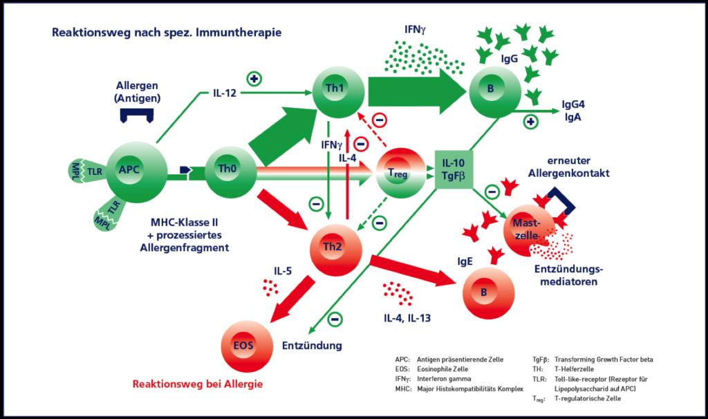 Allergien 1024x606 - Allergologie München